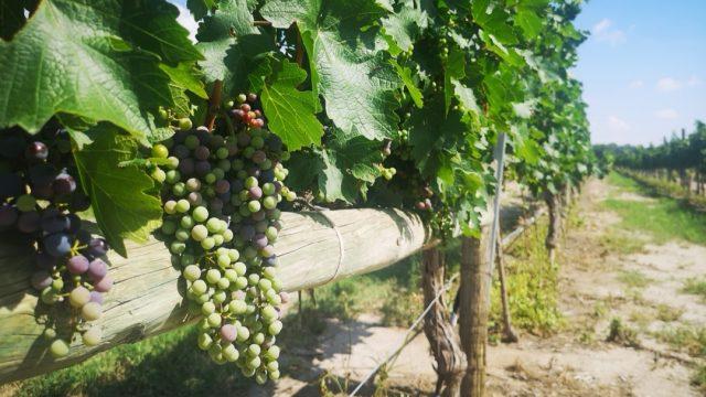 Parras Museo del Vino