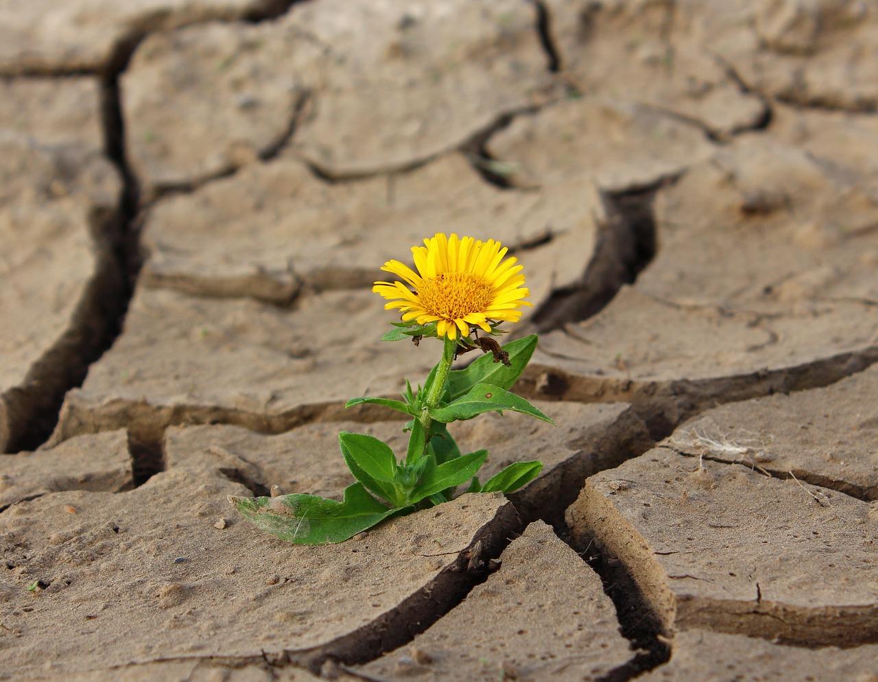 El mundo tiene más hambre, pero la tierra está agotada: IPCC