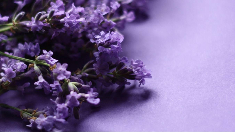¿Insomnio? pon estas flores en tu habitación para dormir mejor