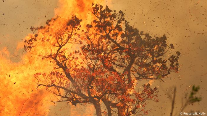 Es el acuerdo UE-Mercosur ¿culpable de la quema en la Amazonia?