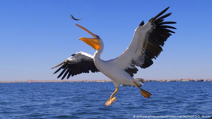 Reconectarse con los océanos sana el alma y puede salvar al planeta