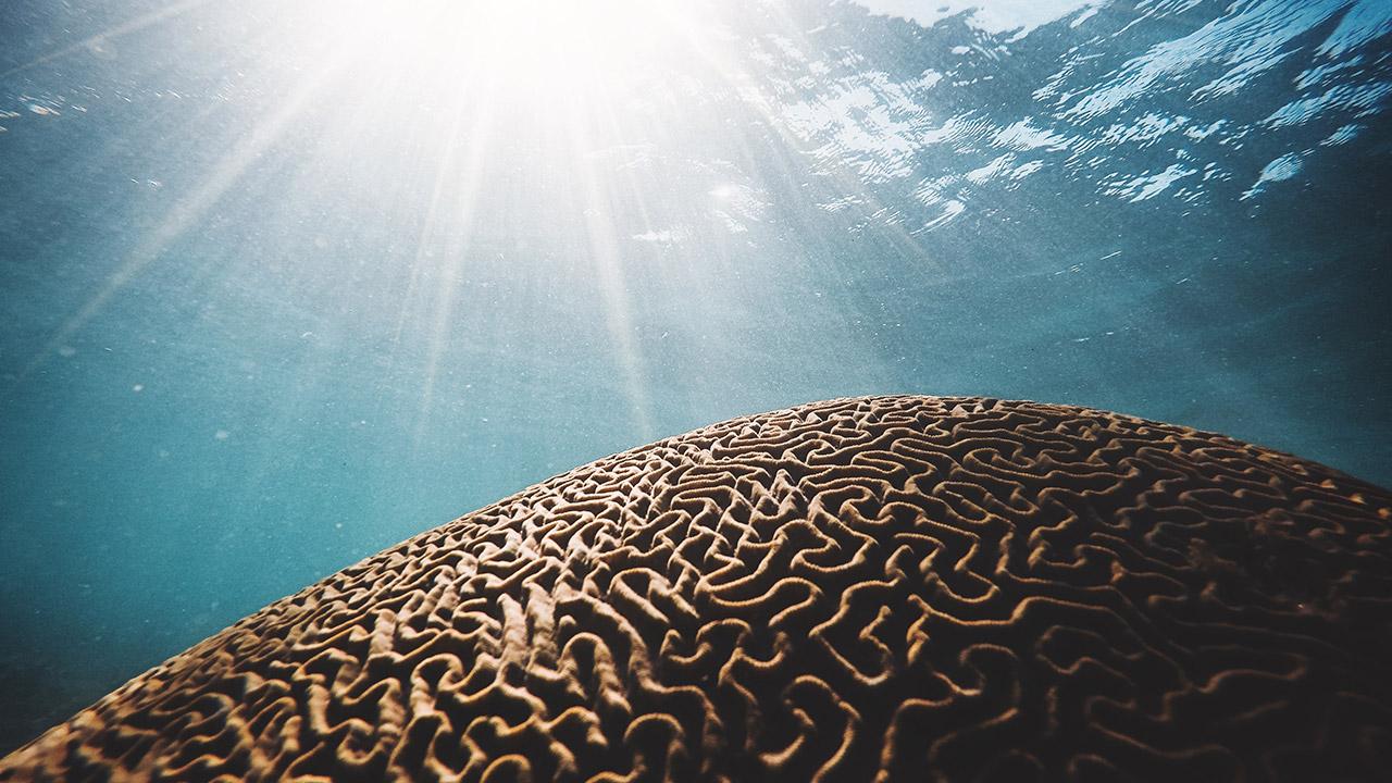 Tailandia prohíbe el uso de protectores solares con químicos que dañen los corales
