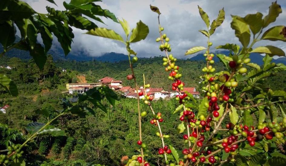 Tres fincas cafetaleras que debes conocer en Chiapas