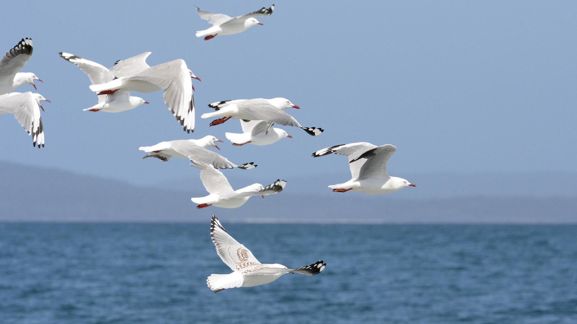 Culpan a humanos por caída en población de aves en EU y Canadá