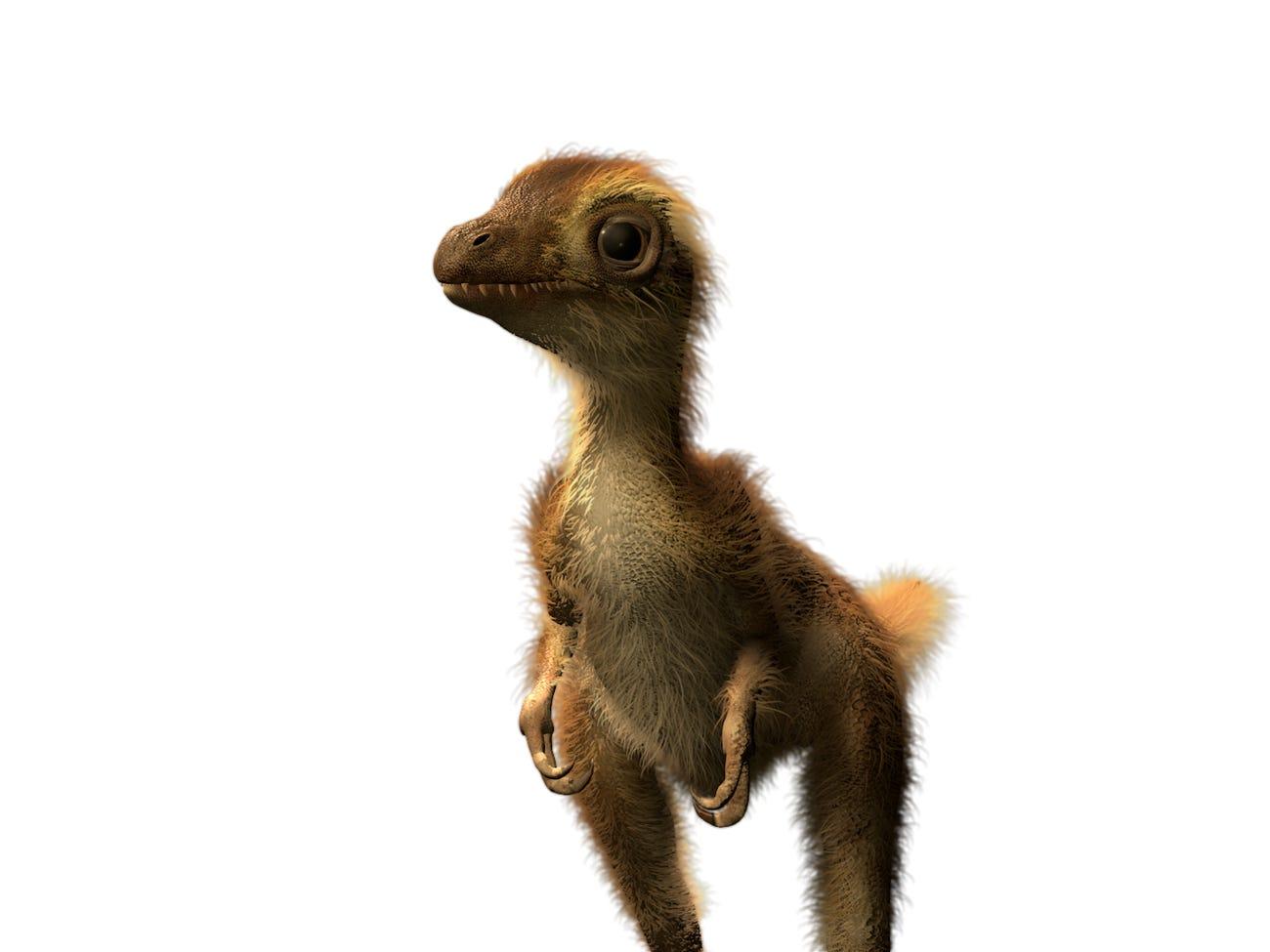 Fotogalería | Así era el T-Rex recién nacido; aquí su evolución