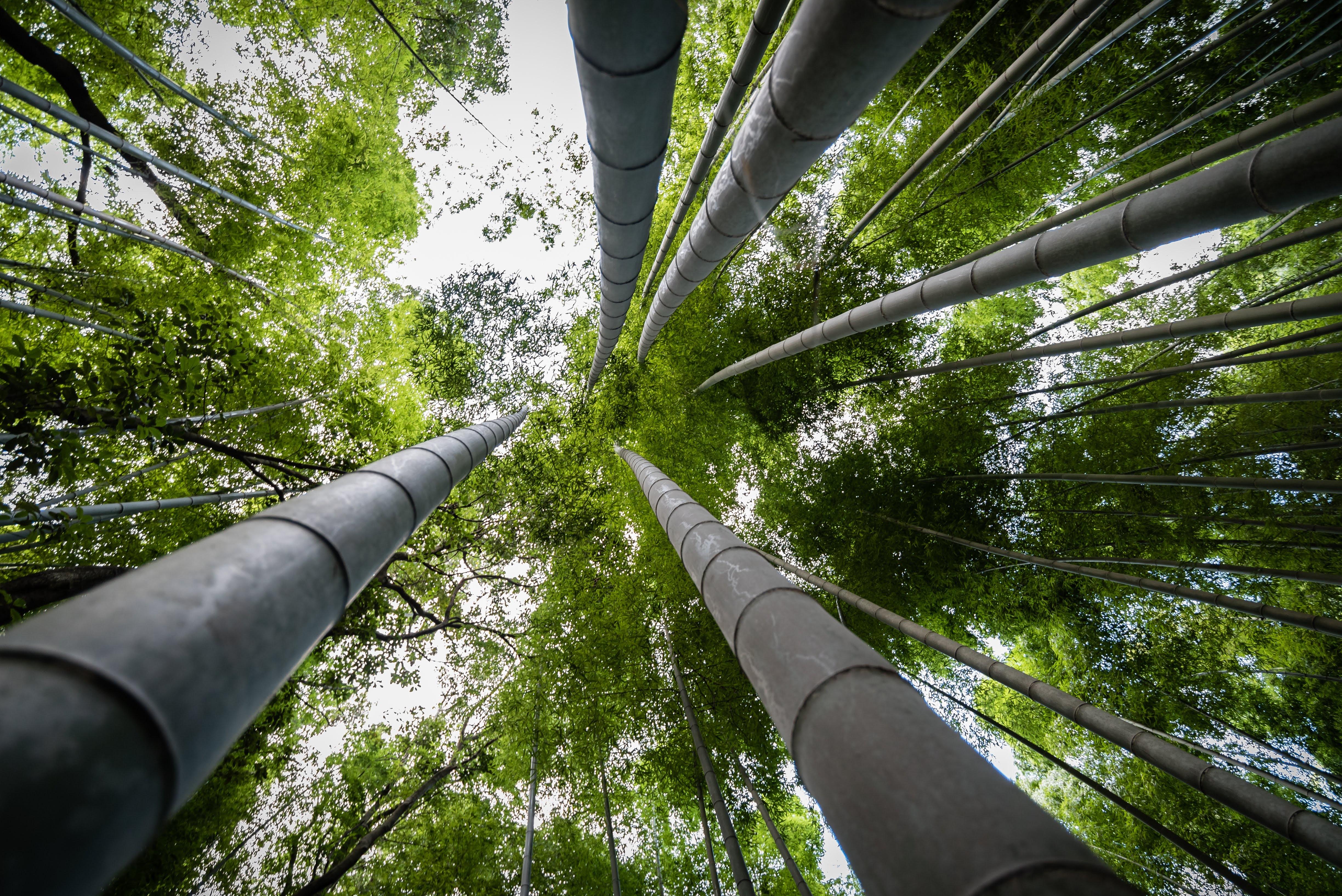 Cómo convertir tu empresa en compañía bambú