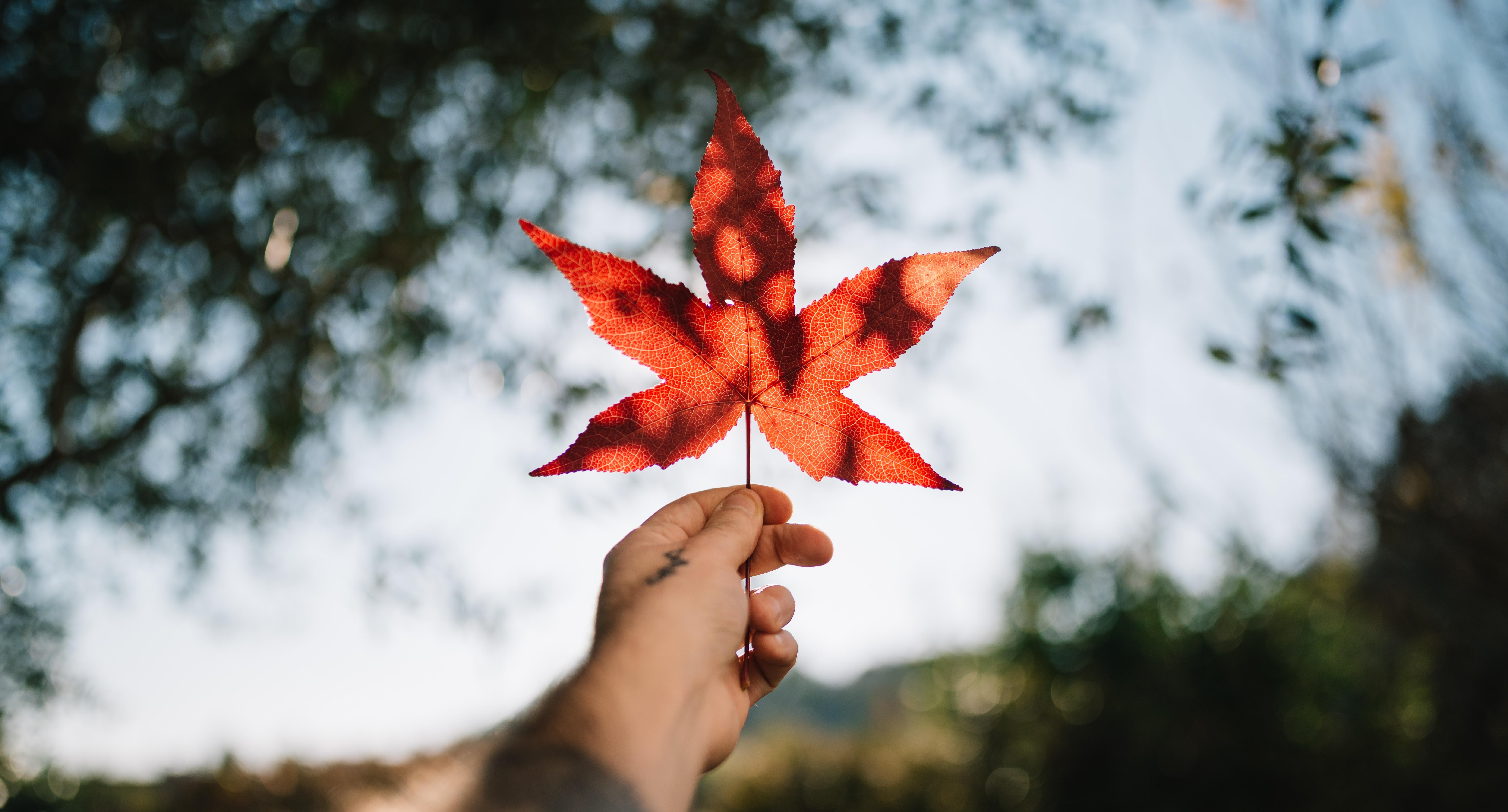 Estudia en Canadá… si puedes comprobar al menos 200,000 pesos al año