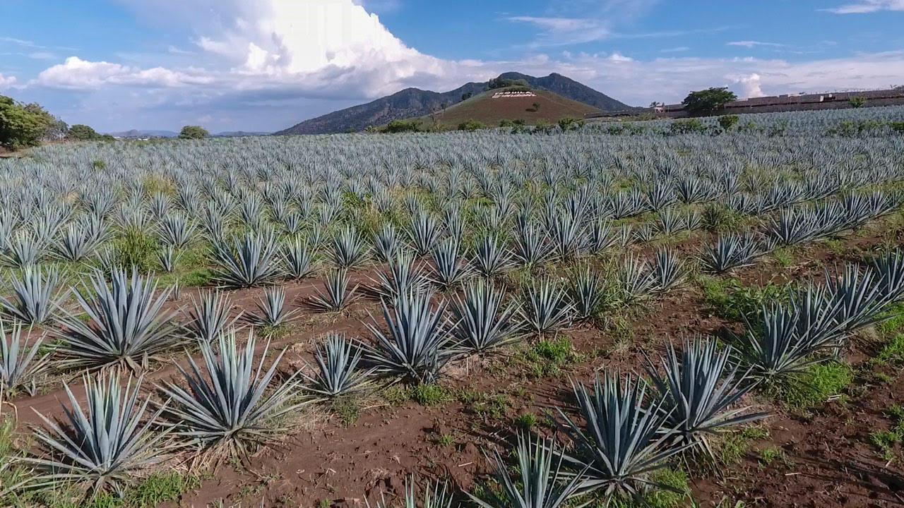 El tequila gana presencia en Singapur y asegura su protección como marca certificada