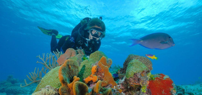 Cozumel es el mejor destino de buceo en el Caribe: Scuba Diving Magazine