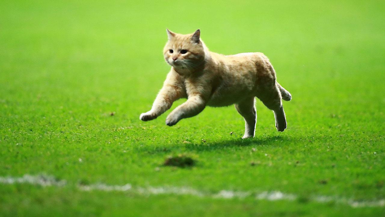 Bayern Münich quiere fichar a 'catinho', el gato que se metió al juego del Tri