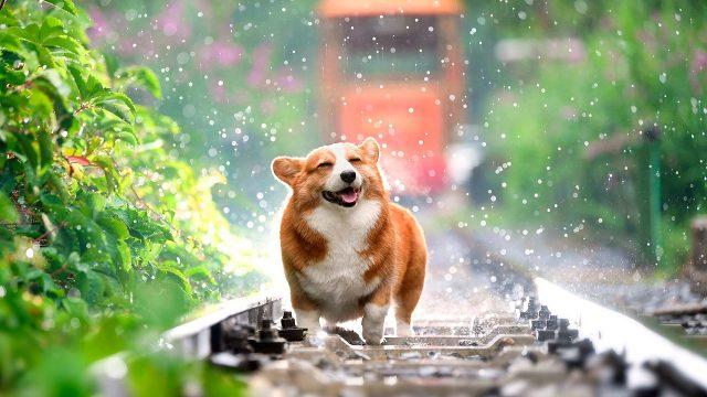 mascotas-perros