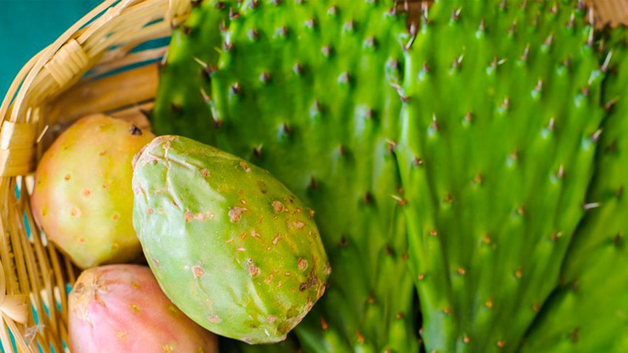 Mexicanos crean piel de nopal para ayudar a reducir el impacto ambiental