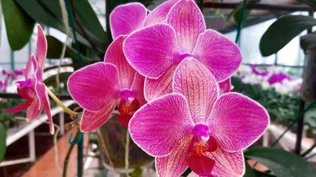 Cómo cuidar una orquídea. Sigue las sugerencias de los expertos