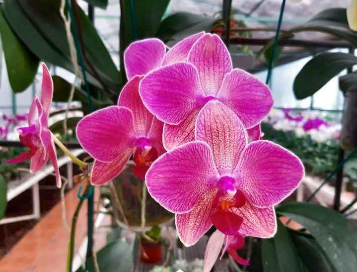 Todo lo que debes saber para cuidar una orquídea