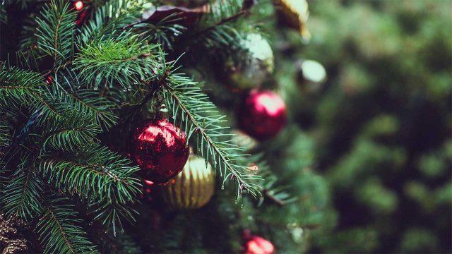 árboles-navideños-renta-tala
