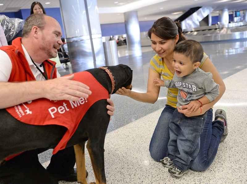 Programa antiestrés con perros en aeropuerto de Los Ángeles