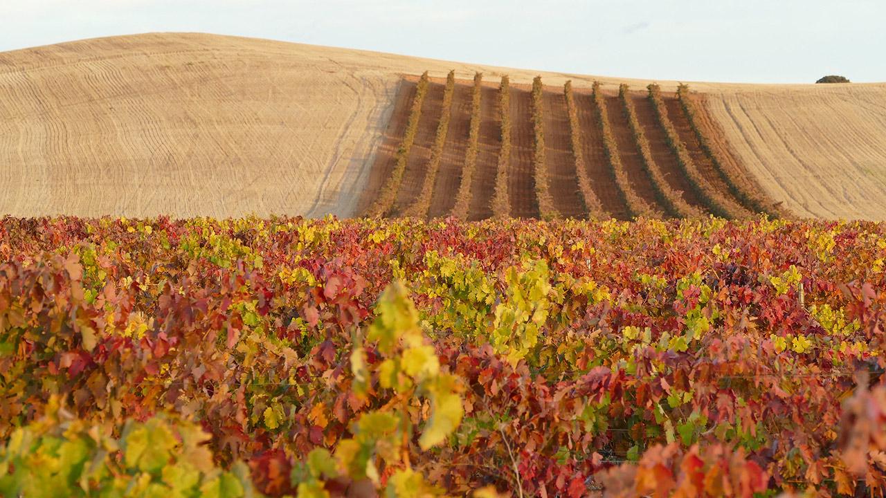 Conoce la excelencia de un vino de la D.O. Ribera del Duero