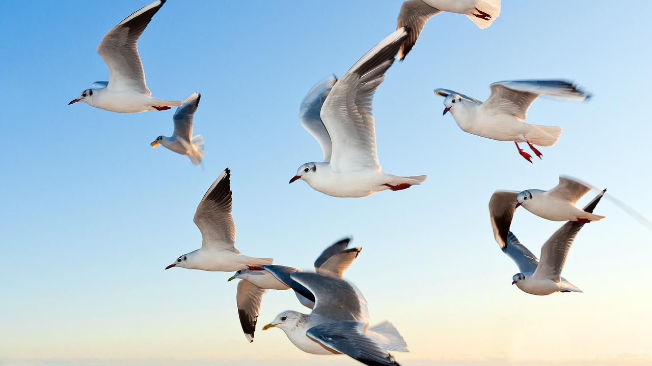 Cambio climático estaría reduciendo el tamaño de las aves: estudio