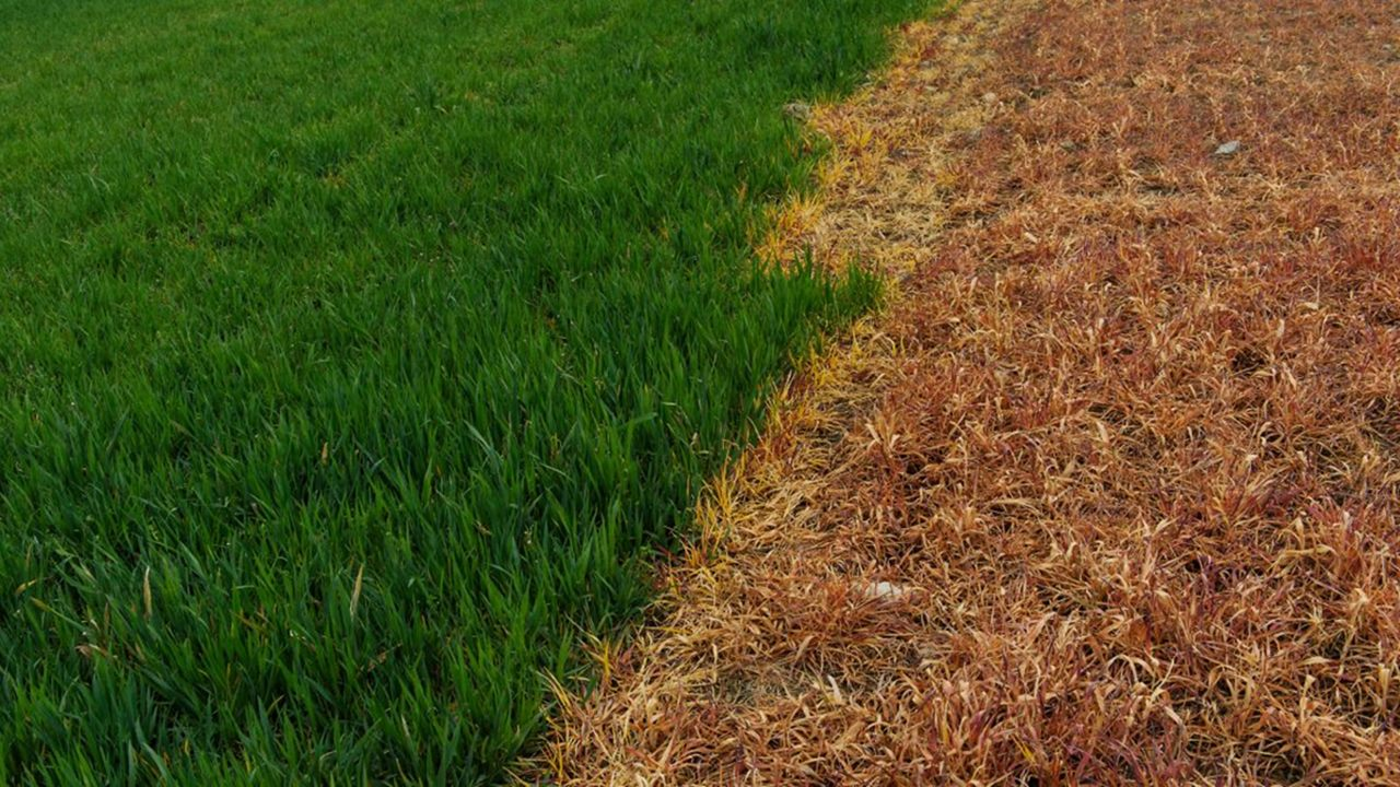 Semarnat pone fecha para el fin del glifosato presente en herbicidas (y en el maíz)