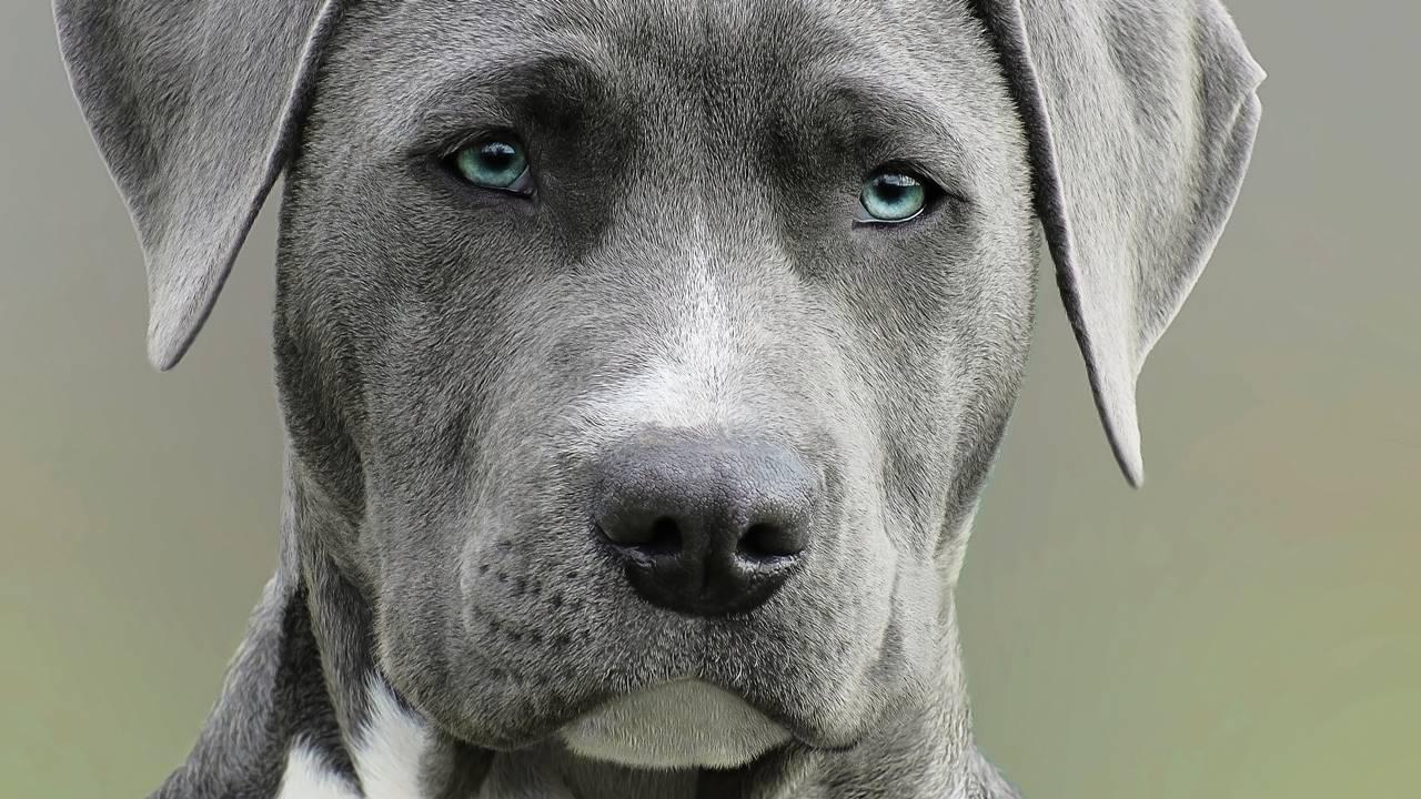 ¿Te puede dar rabia por una mordida de perro? En México ya no