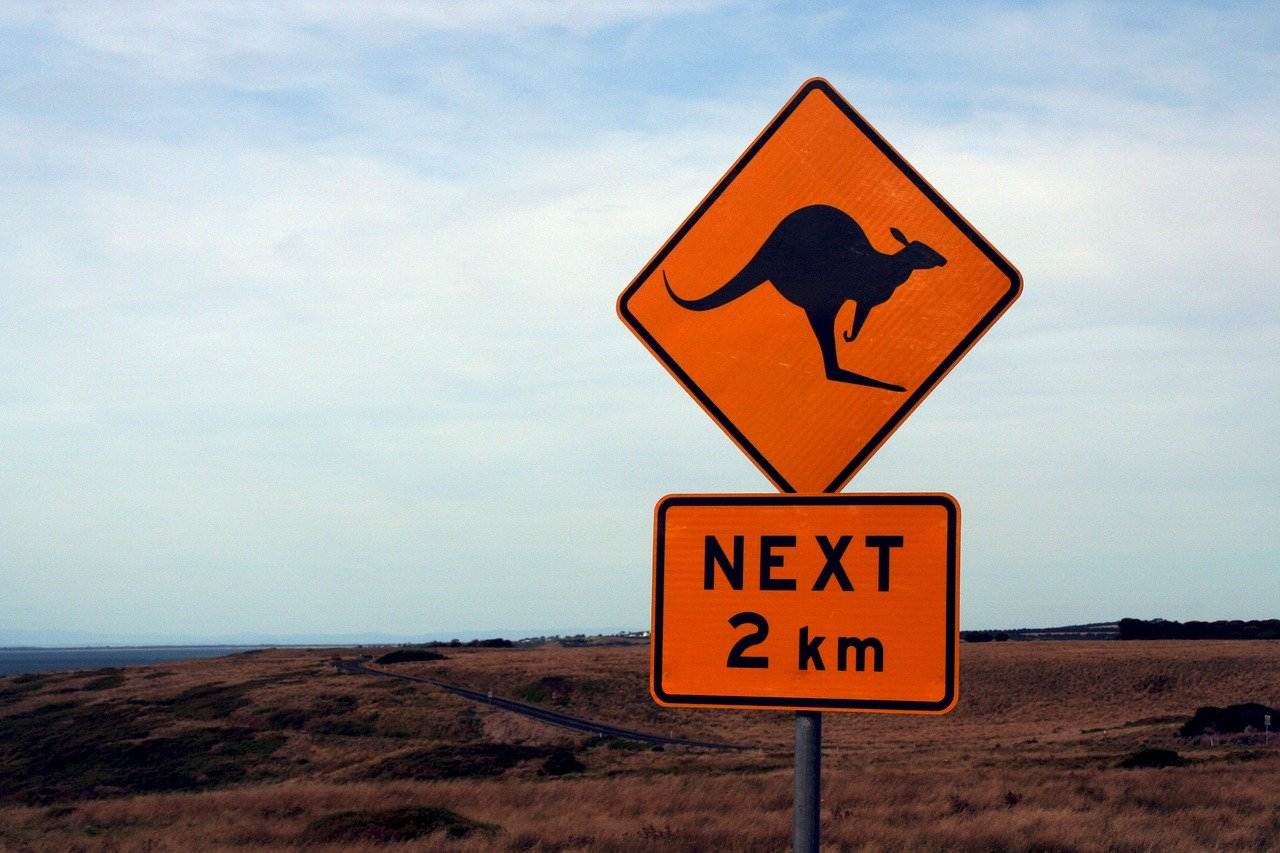 Australia: matando canguros para exportar comida para mascotas