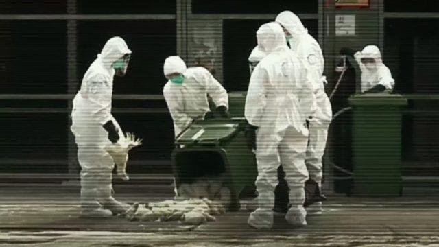Pandemia Netflix virus
