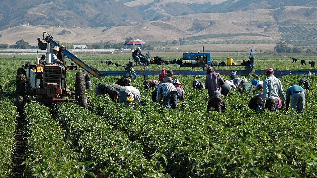 México advierte de medidas recíprocas si EU acciona contra exportaciones agrícolas