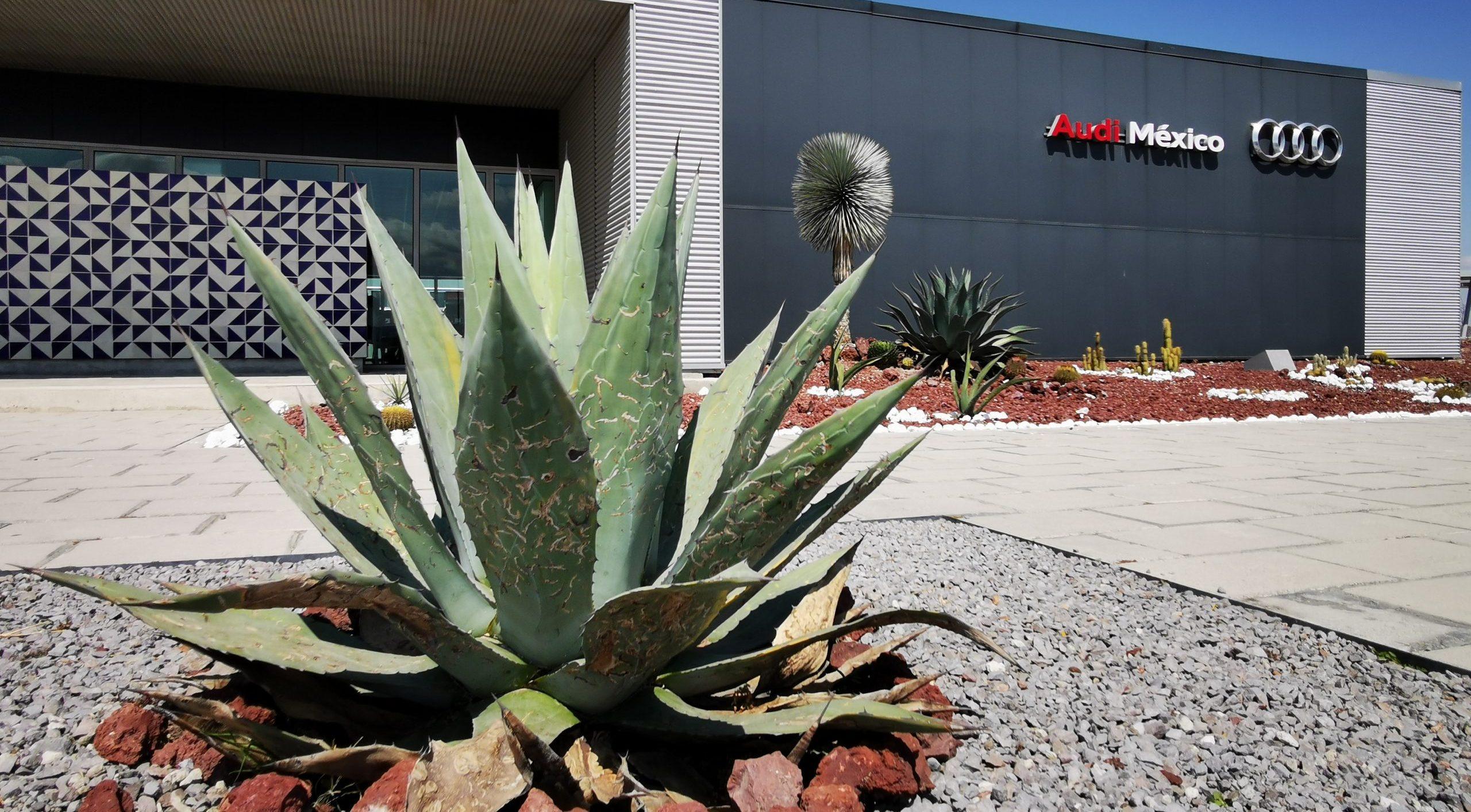 Así es como Audi en México quiere reducir su huella de carbono