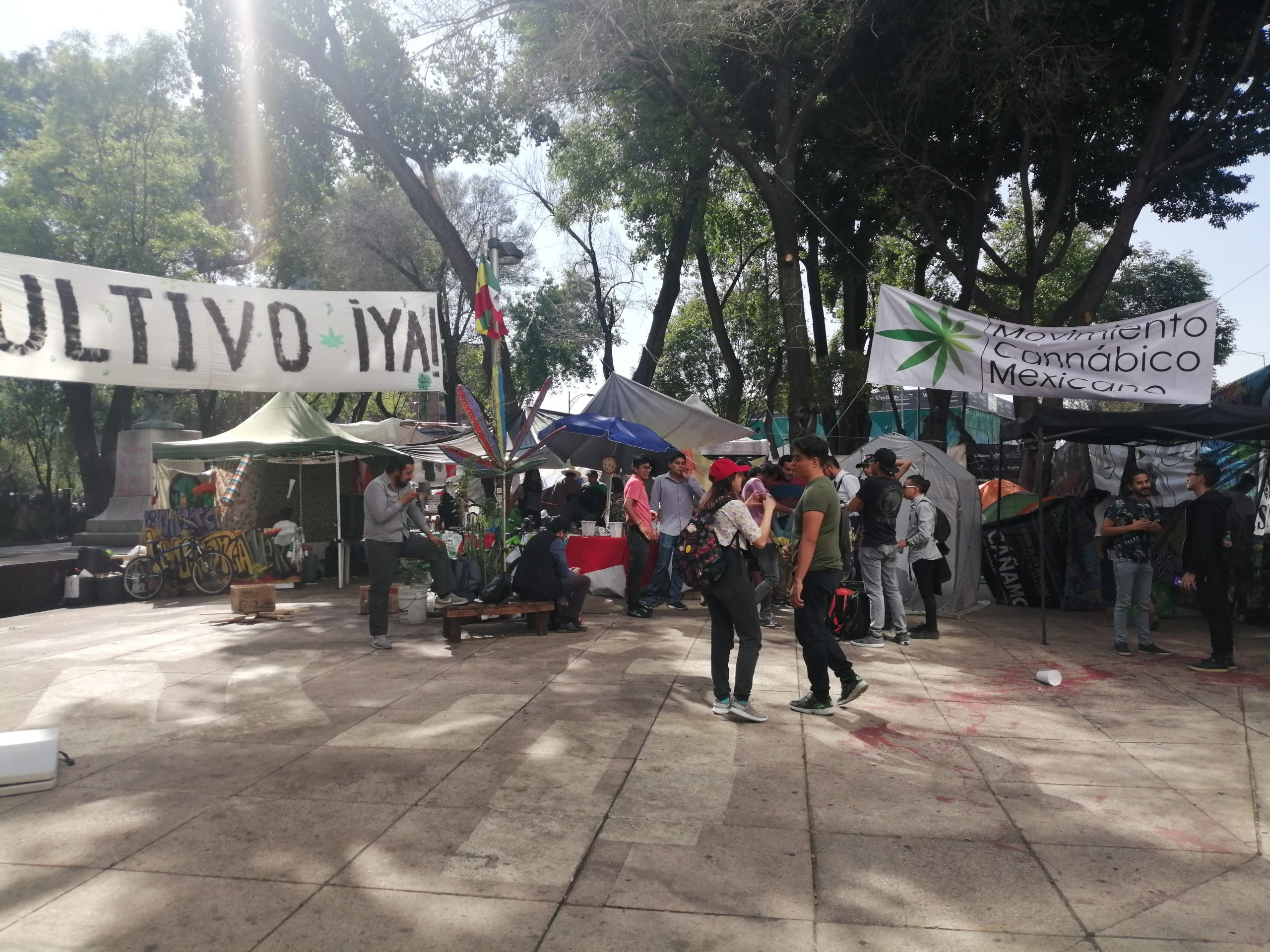 regulación del cannabis