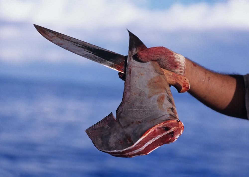 aleta de tiburon sopa