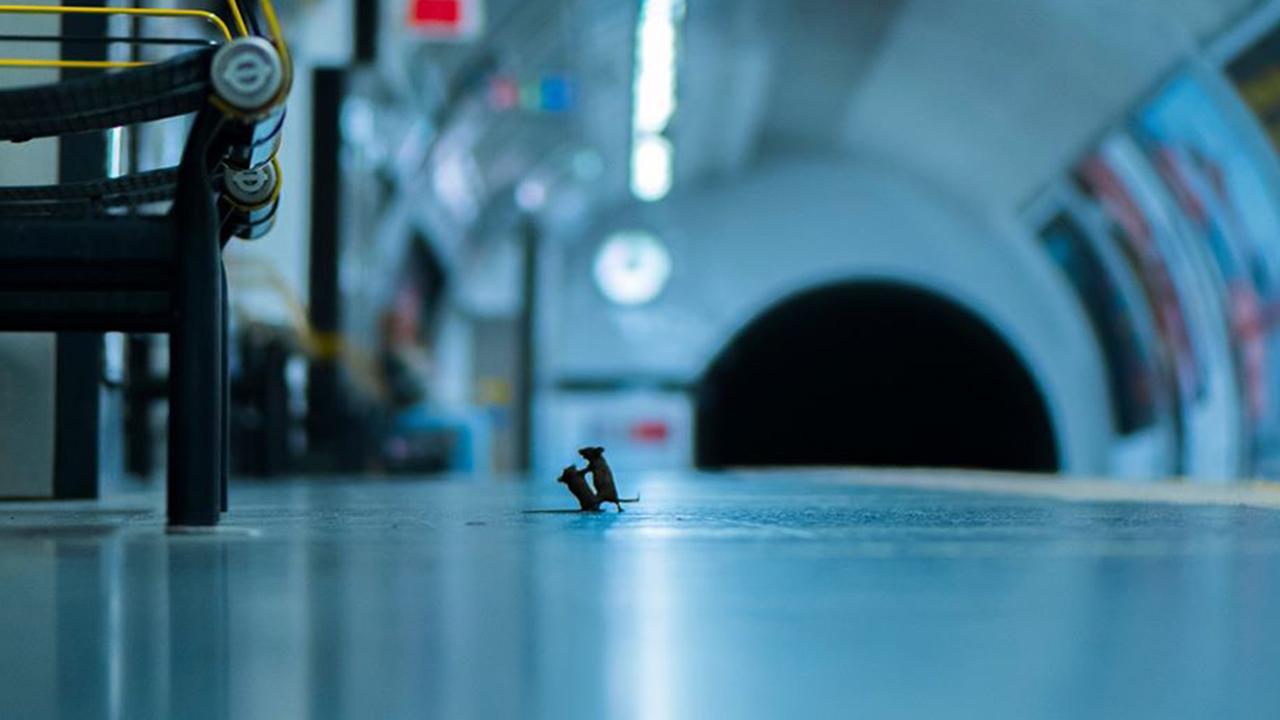 Pelea de ratones gana premio del año a mejor fotógrafo de vida salvaje