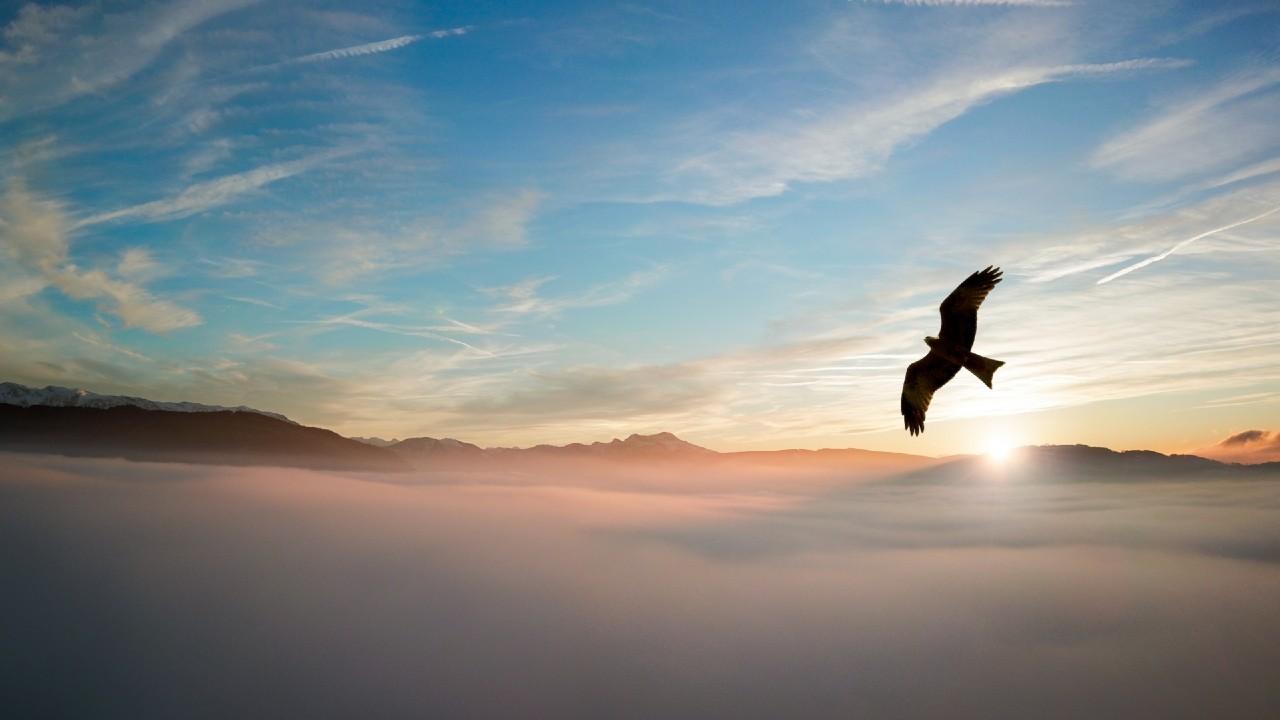 Águila real en peligro por la pérdida de su hábitat en México