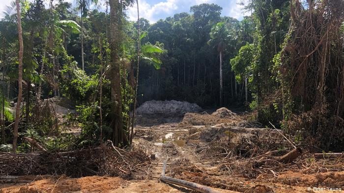 La fiebre del oro en la Amazonia destruye la selva tropical