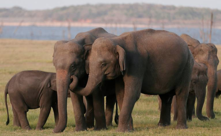 Presentan ropa sustentable para concientizar sobre animales en extinción
