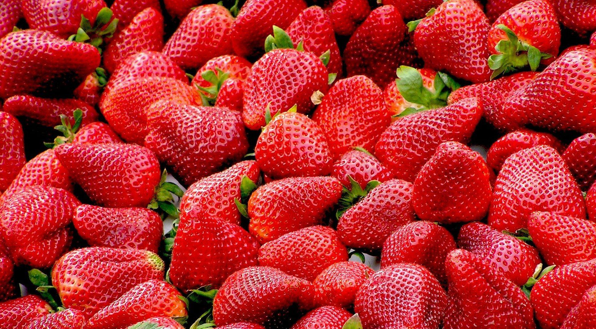 Las berries mexicanas buscan nuevos mercados ante retos del T-MEC y Covid-19