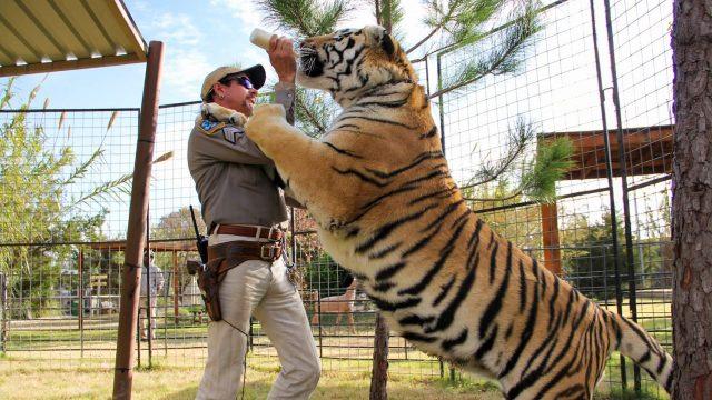 King Tiger Netflix