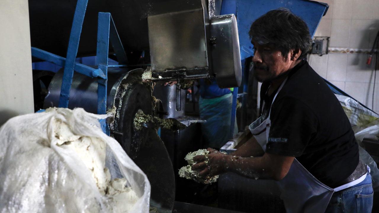 Maiz tortilla nixtamal