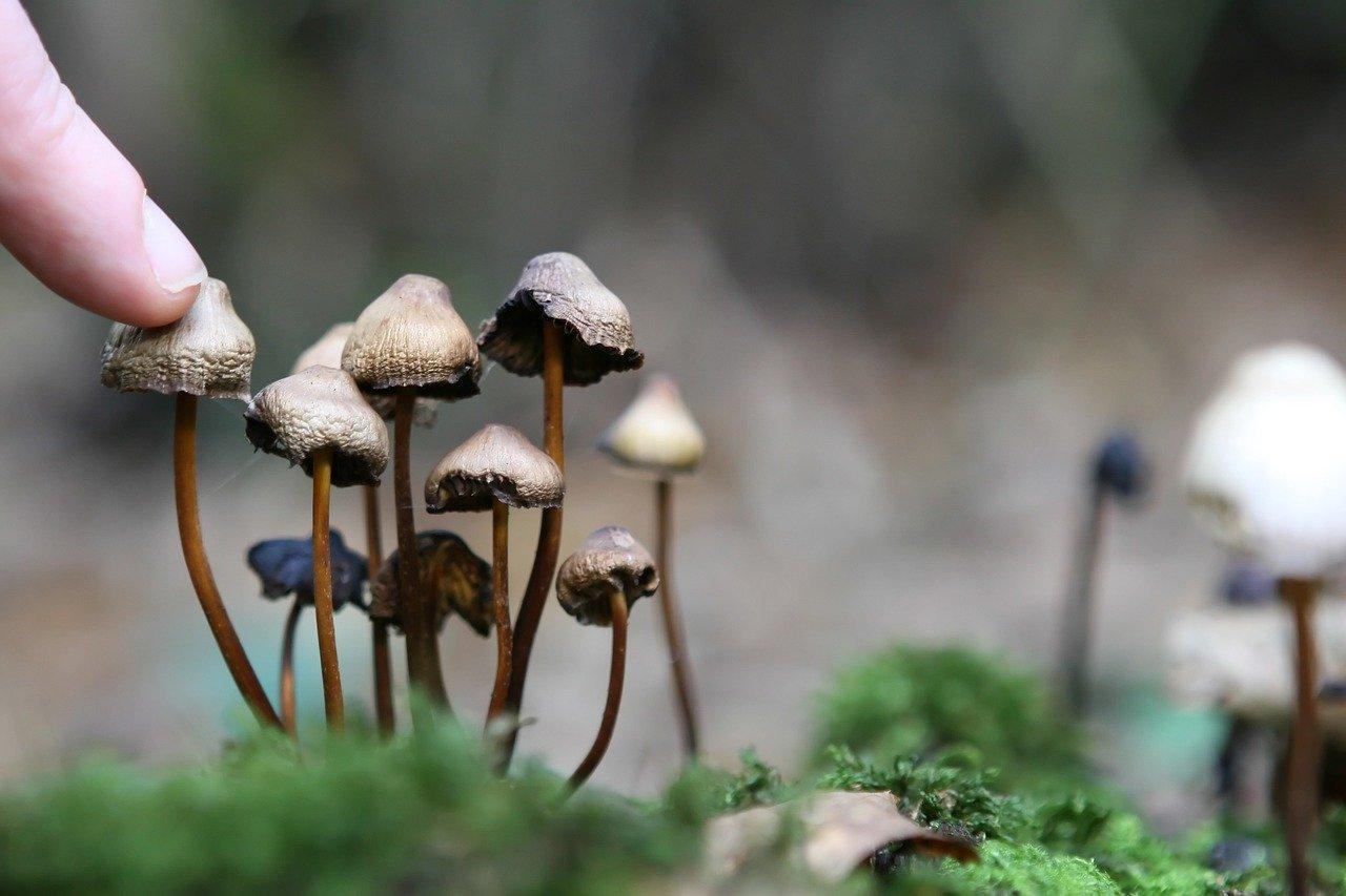 ¿Será la psilocibina de los hongos psicodélicos el nuevo Prozac?