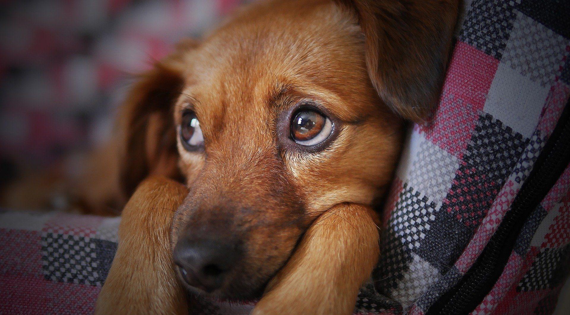 Perros dejarán de considerarse ganado (y comida) en China