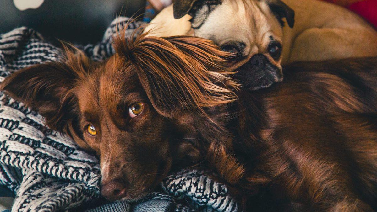 Recomendaciones para evitar el contagio de Covid-19 en animales