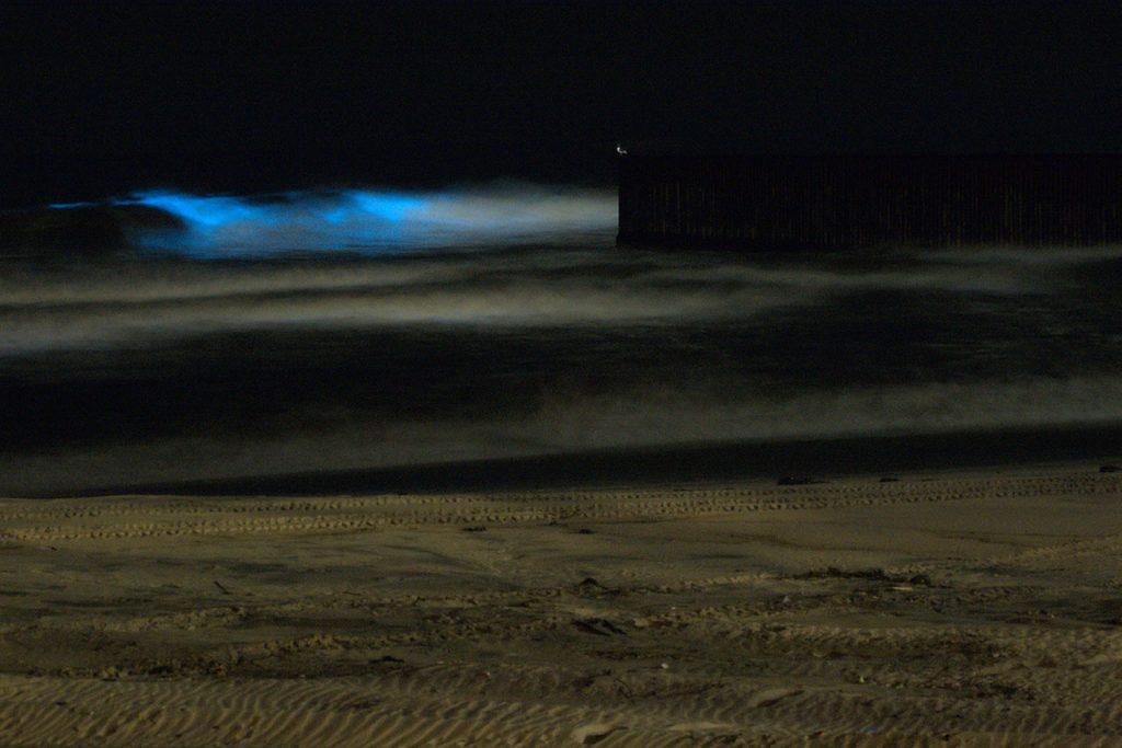 Bioluminiscencia en playas tijuanenes