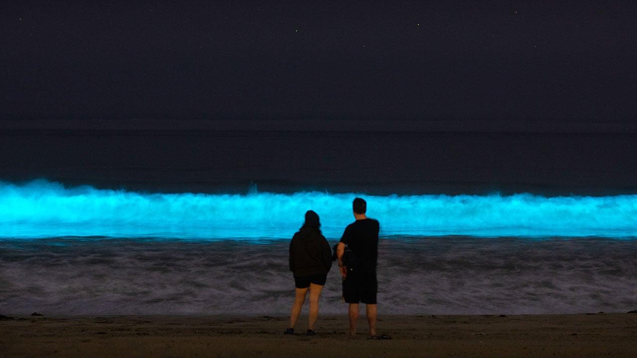 Fotogalería: La bioluminiscencia en el mundo luce ante la ausencia humana