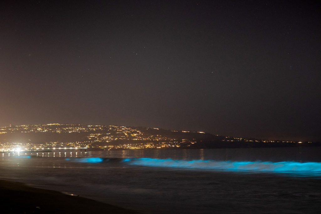 Bioluminiscencia waves glow off Hermosa Beach, California