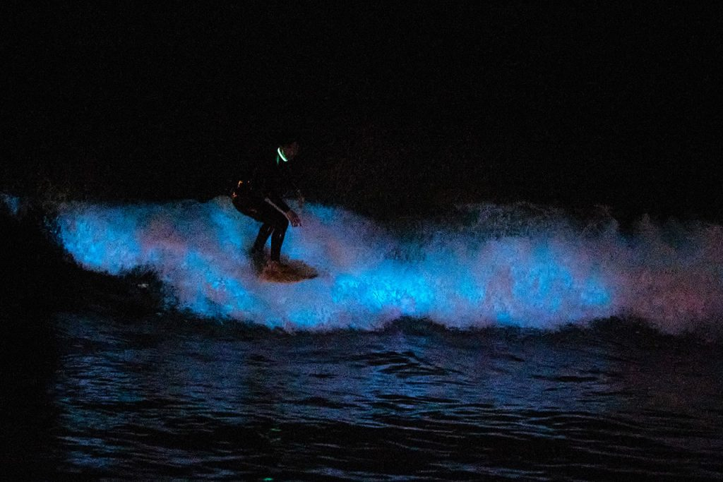 Bioluminiscencia Waves Are Seen In Southern California