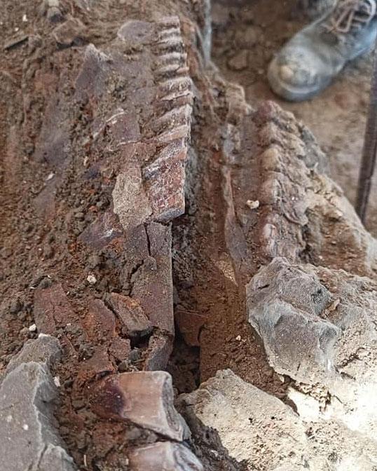 Mamuts Hallazgos en-Santa Lucia