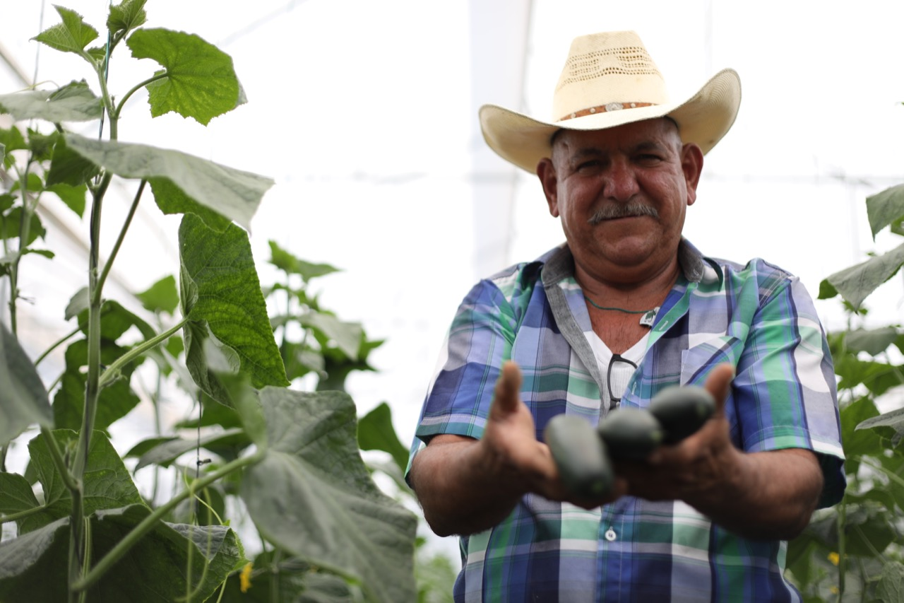 Buscan rescatar 2,700 toneladas de alimentos orgánicos  en peligro por Covid-19