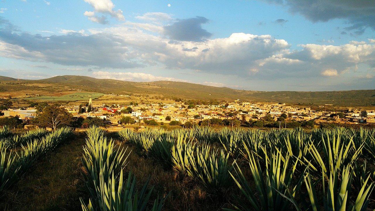 Confidencias: El tequila crece por coronavirus, pero hay nubes negras