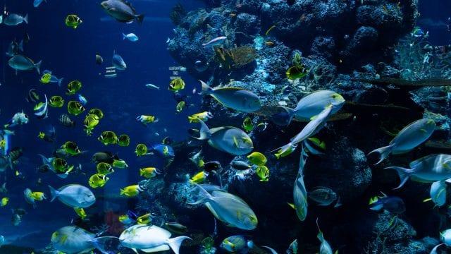 Día Mundial del Océano
