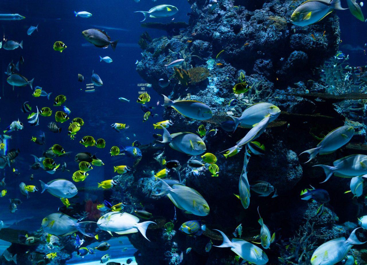 ¿Pueden los bonos azules salvar los océanos?