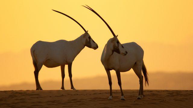Día Mundial del Medio Ambiente Emirates